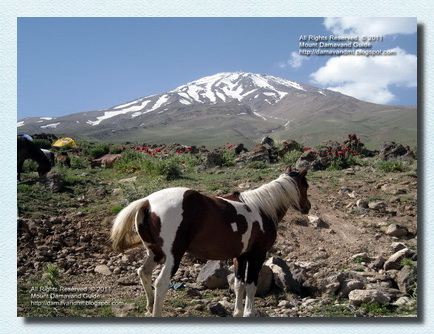 Damavand Nature in Summer